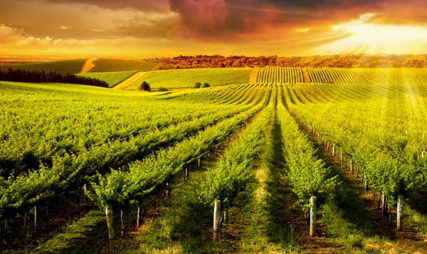 victoria province wine country tours